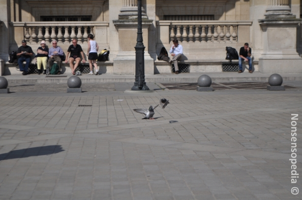 Pigeons on the move
