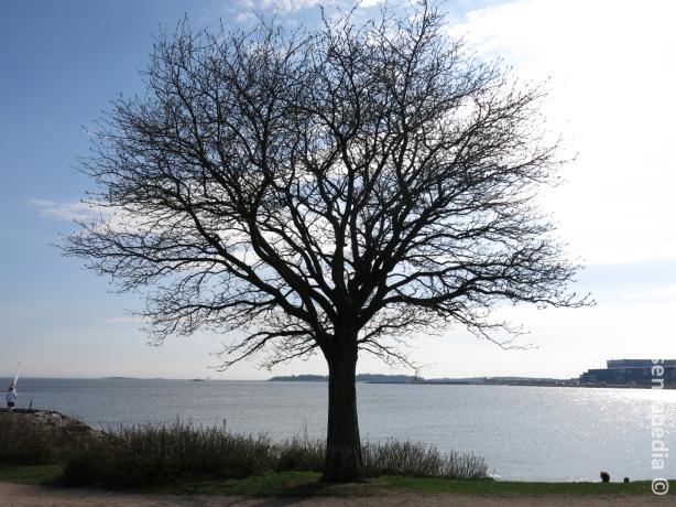Puu ja merimaisema