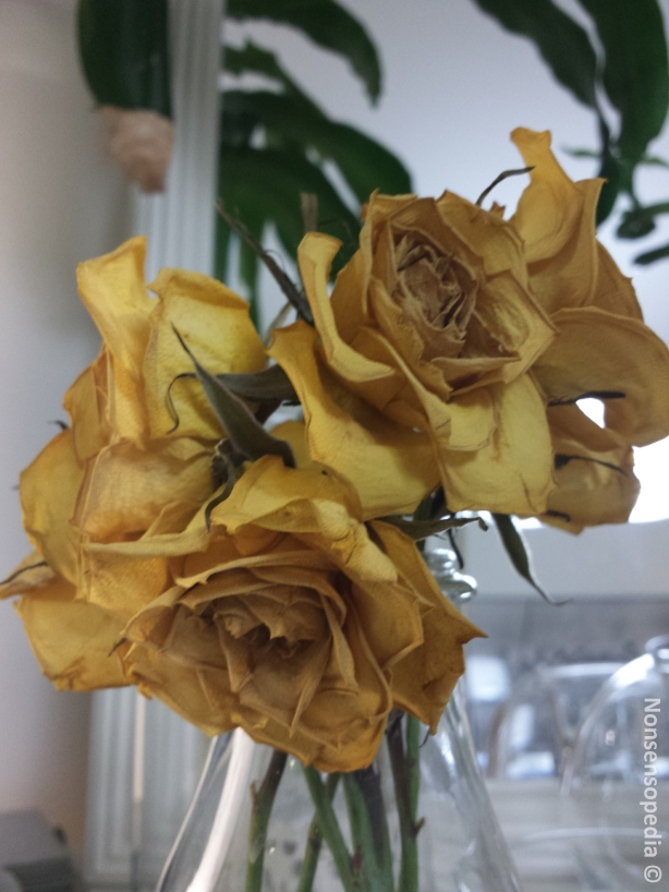 ruususet