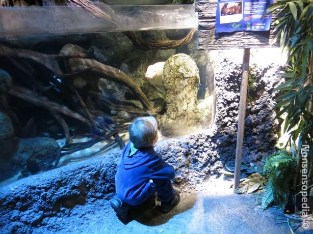 pieni mies ja kala