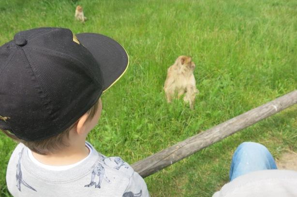 apinaa mä tuijotan