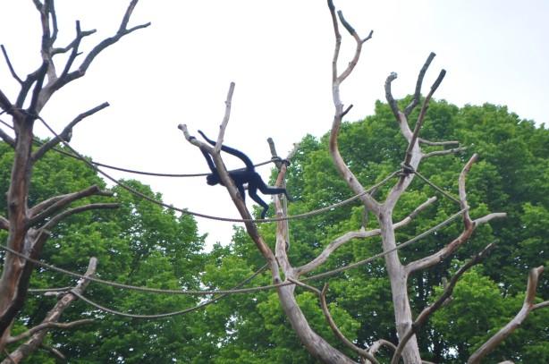 liitävä apina